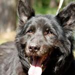 hund-charly-verstorben-laechelt-150x150 Charly – zum Schluss warst Du glücklich