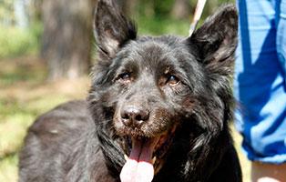 hund-charly-verstorben-laechelt Trauriges - wenn ein Tier die Regenbogenbrücke überquert