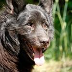 hund-charly-verstorben-schaut-150x150 Charly – zum Schluss warst Du glücklich