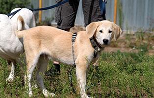 hund-fuchur-notfall-SH192-19-seitenansicht Unterstützen Sie das Tierschutzliga-Dorf