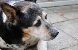 hund-jaccomo-verstorben Trauriges - wenn ein Tier die Regenbogenbrücke überquert