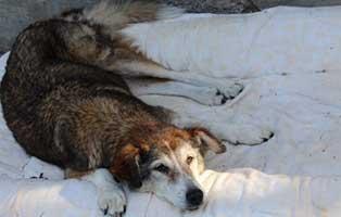 hund-kira-verstorben Trauriges - wenn ein Tier die Regenbogenbrücke überquert