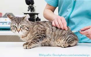 katzen-ratgeber-impfen-imke Katzen impfen – Wann und wogegen?