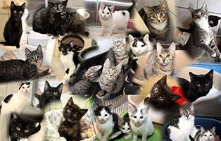 34-katzenkinder-gluecklich-vermittelt Glücklich vermittelt - Tiere haben ein Zuhause