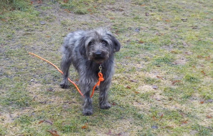 Hund-Strolch-sucht-Paten Cooper - Der Unerzogene