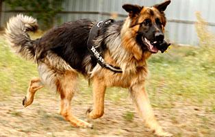 hund-felix-gluecklich-vermittelt Glücklich vermittelt - Tiere haben ein Zuhause