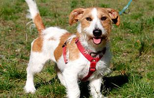 hund-guenther-gluecklich-vermittelt Glücklich vermittelt - Tiere haben ein Zuhause