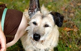 hund-lucy-gluecklich-vermittelt Glücklich vermittelt - Tiere haben ein Zuhause