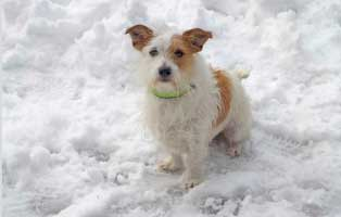 hund-pfoten-pflege-winter Aktuelles - Tierheim Breitenberg