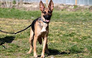 hund-sina-gluecklich-vermittelt Glücklich vermittelt - Tiere haben ein Zuhause