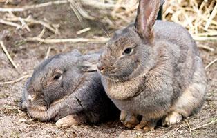 kaninchen-dieter-annett-gluecklich-vermittelt Glücklich vermittelt - Tiere haben ein Zuhause