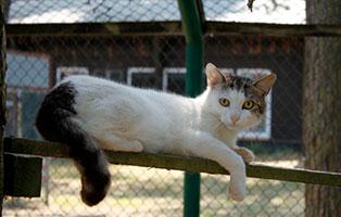 katze-bommel-gluecklich-vermittelt Glücklich vermittelt - Tiere haben ein Zuhause