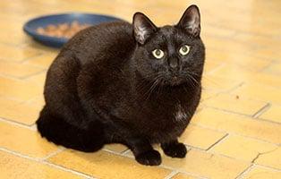 katze-eckard-gluecklich-vermittelt Glücklich vermittelt - Tiere haben ein Zuhause