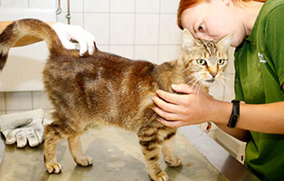 katze-grobi-gluecklich-vermittelt Glücklich vermittelt - Tiere haben ein Zuhause
