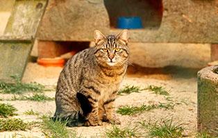 katze-otto-gluecklich-vermittelt Glücklich vermittelt - Tiere haben ein Zuhause