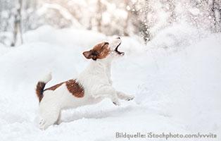 ratgeber-hunde-schnee-spielt Hunderatgeber