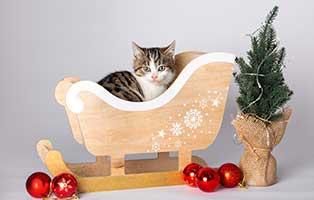 tierische-weihnacht-thueringen-katze-schlitten Katzenstation Thüringen