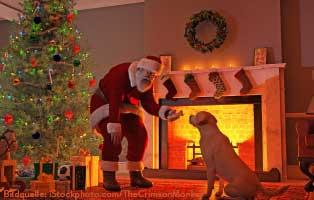 weihnachtsmann-beschenkt-hund Tierisch tierisch - die vorgestellten Tiere