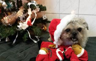 weihnachtswichteln Tierschutzliga-Dorf