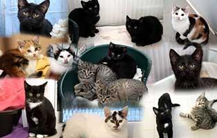Katzenkinder-2019-gluecklich-vermittelt Glücklich vermittelt - Tiere haben ein Zuhause