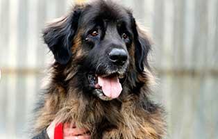 hund-baldo-gluecklich-vermittelt Glücklich vermittelt - Tiere haben ein Zuhause