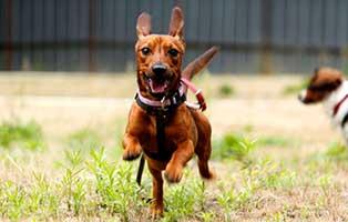 hund-bansko-gluecklich-vermittelt Wirbelwind Bansko