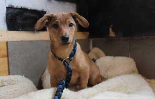 hund-feliz-bèkèscsaba-aufnahmepatenschaft Tiervermittlung in unseren Tierheimen