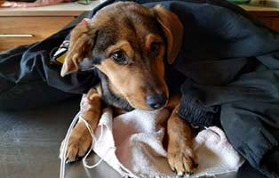 hund-franka-bekescsaba-giardien Weihnachtswichteln für unsere Tierheimschützlinge