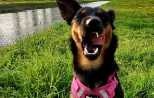 janka-tierische-geschichten-lacht Glücklich vermittelt - Adoption geglückt