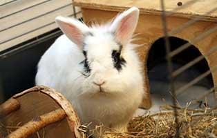 kaninchen-bluno-gluecklich-vermittelt Glücklich vermittelt - Tiere haben ein Zuhause