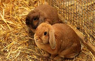kaninchen-erni-elli-gluecklich-vermittelt Glücklich vermittelt - Tiere haben ein Zuhause