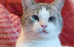 kater-skimble-gluecklich-vermittelt Glücklich vermittelt - Tiere haben ein Zuhause