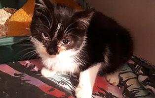 kater-tim-katzenschnupfen-helfen Ausbau-Patenschaft - Raum schaffen