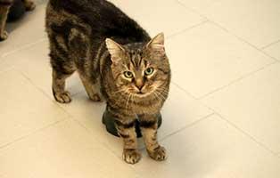 kater-zausel-gluecklich-vermittelt Glücklich vermittelt - Tiere haben ein Zuhause