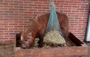 pony-pepper-wardenburg Unser Hundeauslauf braucht ein Dach - Tierheim Unterheinsdorf