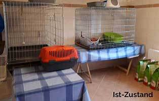 quarantaenekaefige-unterheinsdorf-box-1 Messihaushalt – vierzehn kranke Katzen gerettet – Tierschutz-Alltag