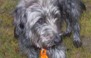 ratgeber-hunde-angsthund Tierparadies Breitenberg