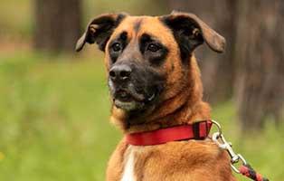 hund-prinz-verstorben-portrait Trauriges - wenn ein Tier die Regenbogenbrücke überquert