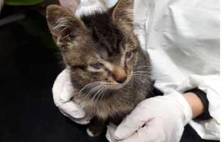 katzebaby-beschlagnahmung-katzenschnupfen-arzt Tag der offenen Tür 2019 im Tierschutzliga-Dorf