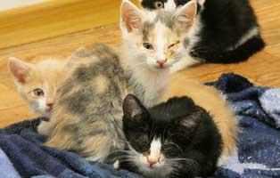 katzen-ratgeber-katzenschnupfen Die Fellfarbe der Katze