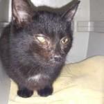 katzenfangaktion-tierschutzliga-dorf-katze-auge-150x150 Katzenfangaktion vom Tierschutzliga-Dorf