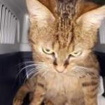katzenfangaktion-tierschutzliga-dorf-katze-braun-150x150 Katzenfangaktion vom Tierschutzliga-Dorf