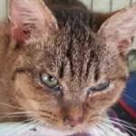 katzenfangaktion-tierschutzliga-dorf-katze-krank-150x150 Katzenfangaktion vom Tierschutzliga-Dorf