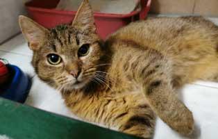 katzenfangaktion-tierschutzliga-dorf-katze-pimpf Katzenfangaktion vom Tierschutzliga-Dorf