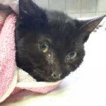 katzenfangaktion-tierschutzliga-dorf-katze-schwarz-150x150 Katzenfangaktion vom Tierschutzliga-Dorf