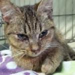 katzenfangaktion-tierschutzliga-dorf-katze1-150x150 Katzenfangaktion vom Tierschutzliga-Dorf
