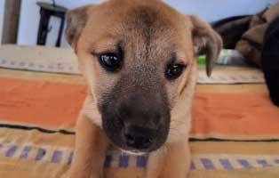 mainga-huendin-bekescsaba-aufnahmepaten 6 Hunde aus dem Tierheim Bèkèscsaba suchen Aufnahmepaten