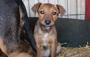 neun-ausgesetzte-hunde-bekescsaba-welpe Neues aus dem Tierheim Bèkèscsaba - Welpe Franka kämpft ums Überleben