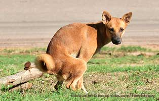 ratgeber-hunde-durchfall Täglich frisches Wasser ist ein Muss