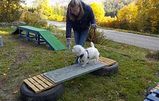trainingsgeraete-breitenberg-bruecke Tierparadies Breitenberg